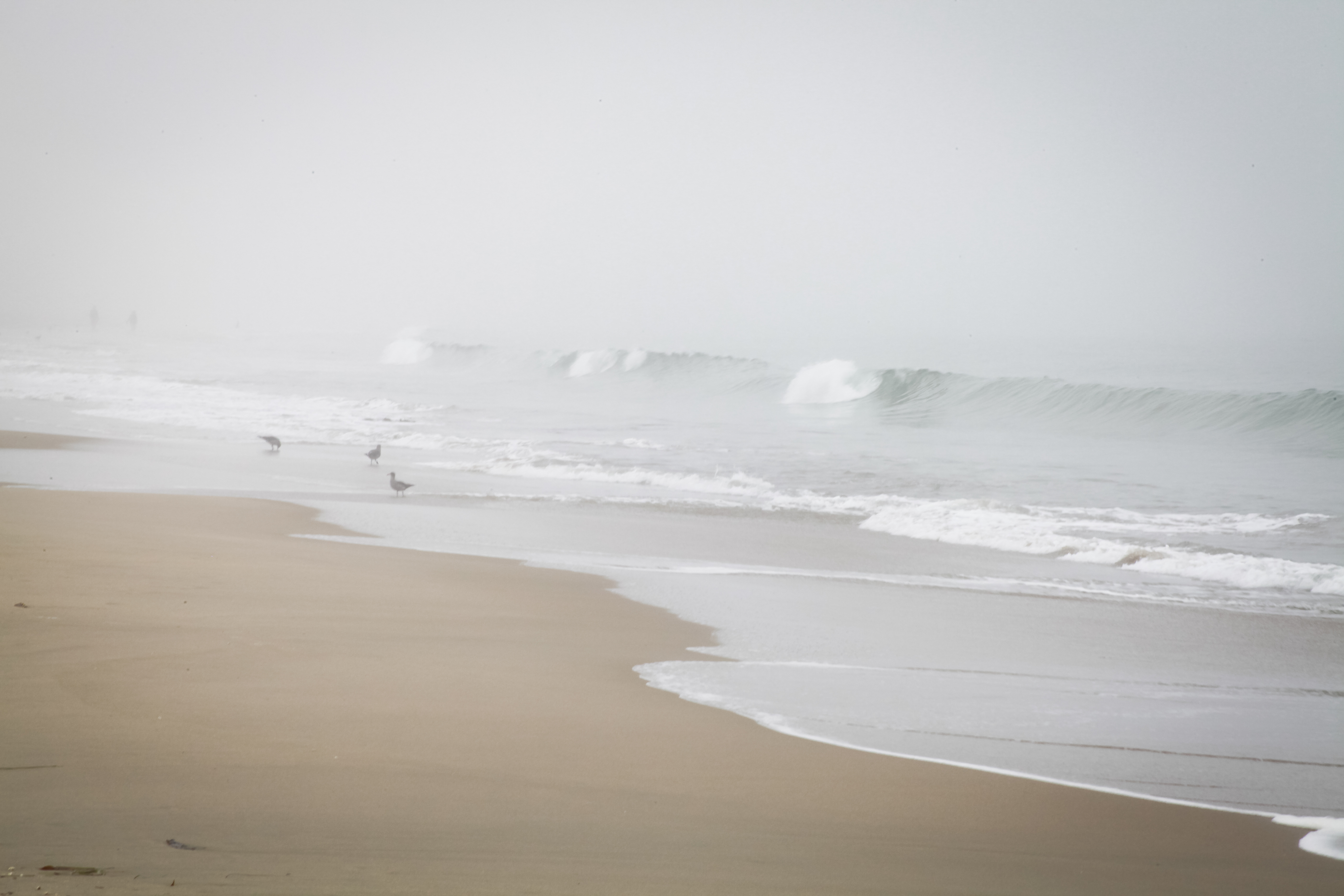 Monterey fog photo by rottnapples
