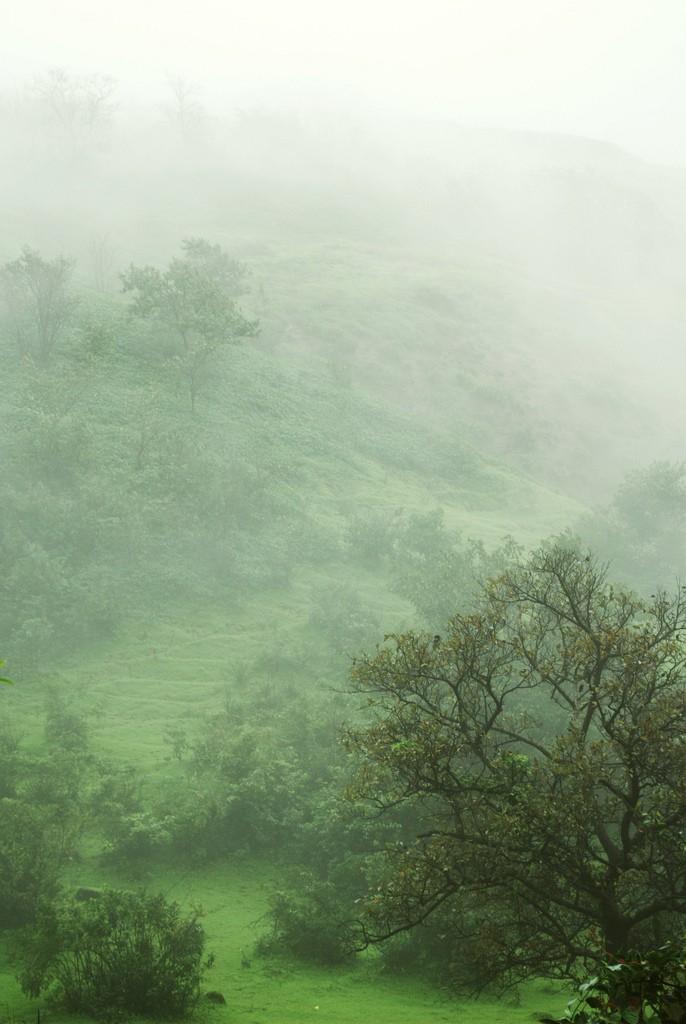 On A Misty Morning photo by Alosh Bennett