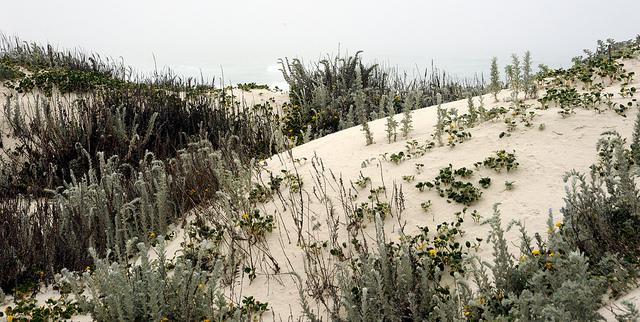 Sand dune at Asilomar photo by Wonderlane