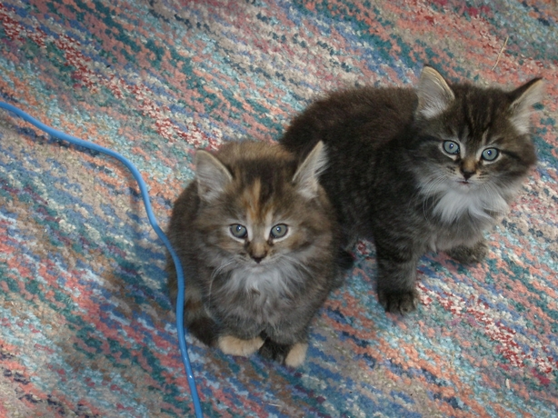 Aurora and Orion as babies