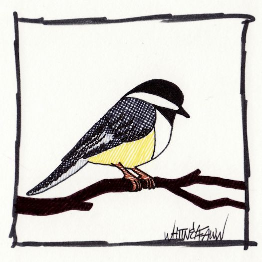 Day 22 - Black-capped Chickadee