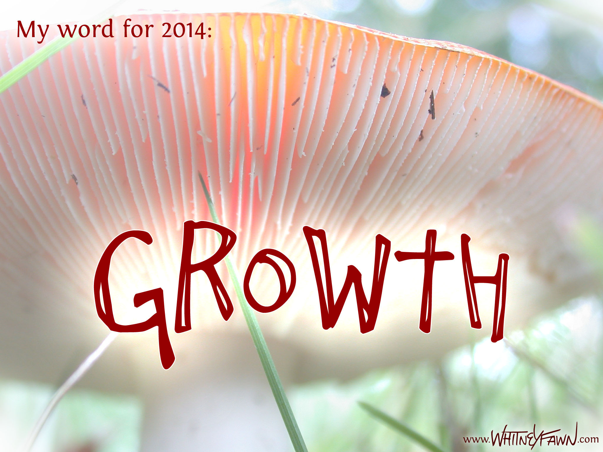 My word for 2014 is Growth